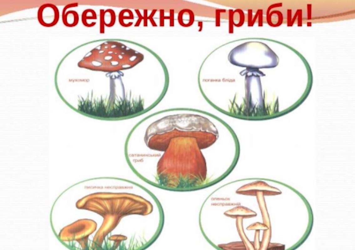 """Результат пошуку зображень за запитом """"Про небезпеку отруєння дикорослими грибами"""""""