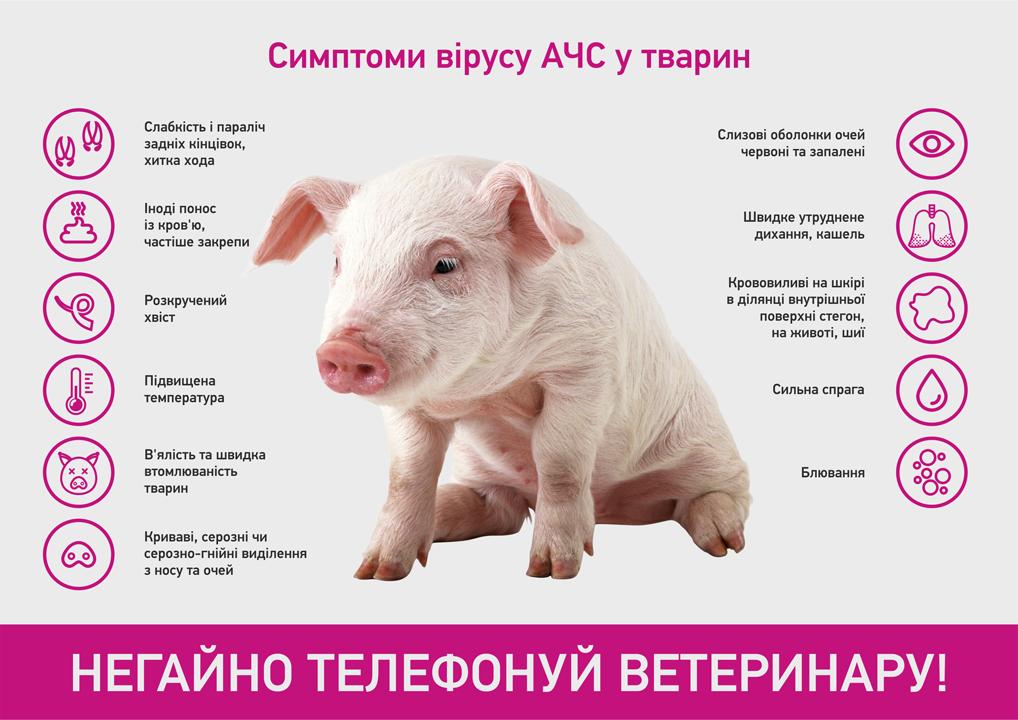 Сертифіковане м'ясо перед вживанням рекомендують піддавати термообробці -  Новини Полтавщини